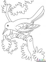 布谷鸟涂色画