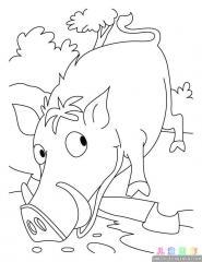 野猪涂色画