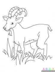 山羊涂色画