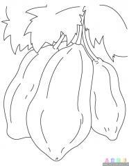 木瓜涂色画