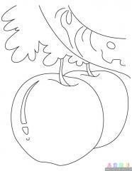 苹果涂色画