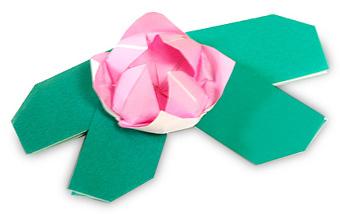 折纸水莲花的方法和步骤图解