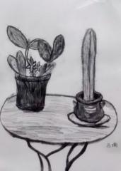 金奖素描画-素描盆栽